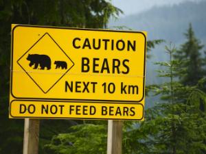 """De kracht van beren en """"Hoe dan wel?"""""""